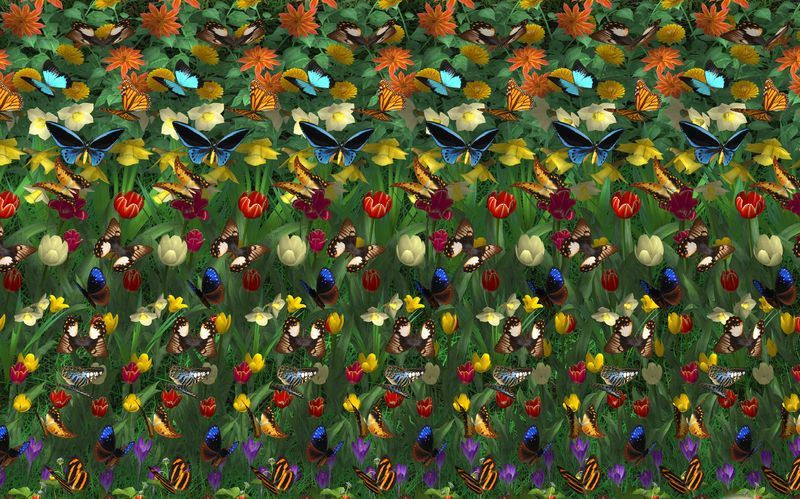 Картинка Стереокартинка бабочки и цветы из коллекции Обои для рабочего стола Стереокартинки