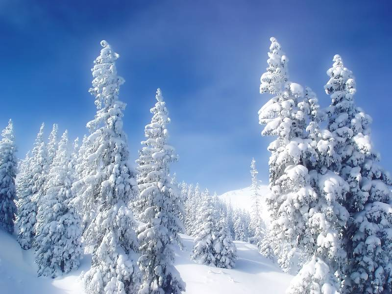 Зимняя природа на рабочий стол.Природа