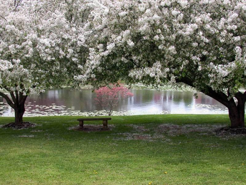 Весна обои - Природа