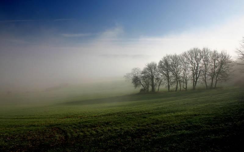 Туманное утро.Природа