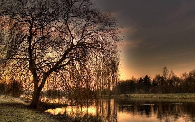 Осеннее дерево у реки.Природа