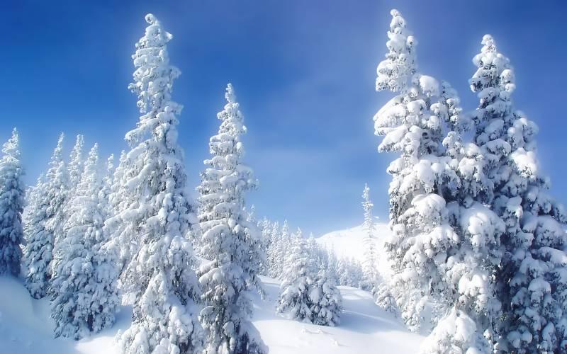 Зимний лес.Природа