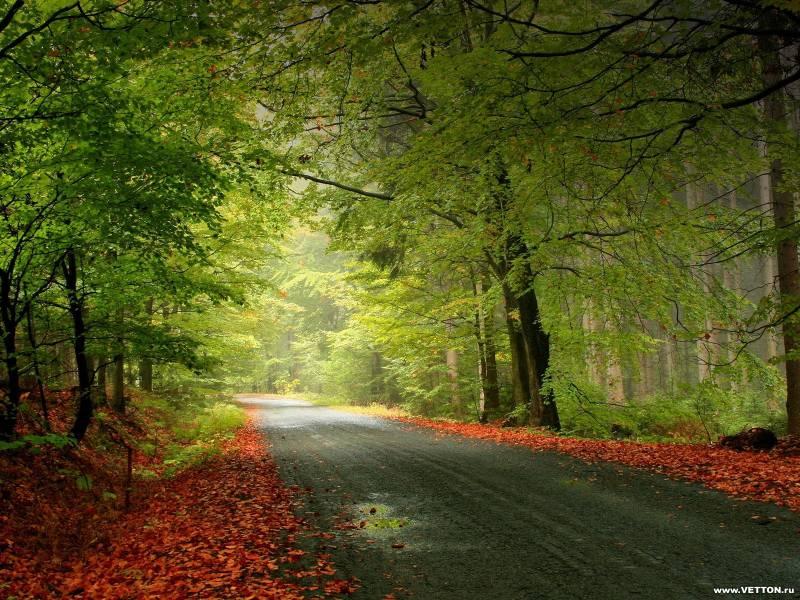 Лес фото - Природа