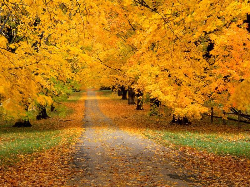 Картинка Осенний лес из коллекции Обои для рабочего стола Природа