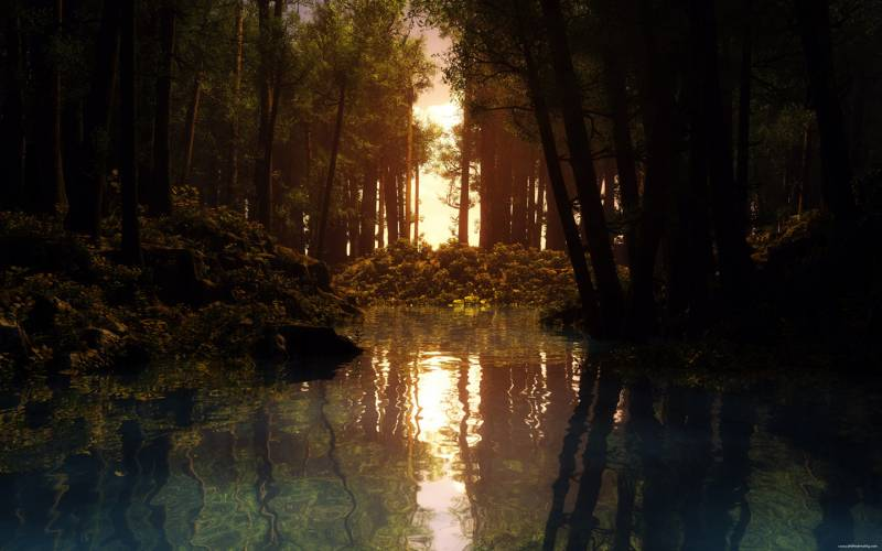 Темный лес.Природа
