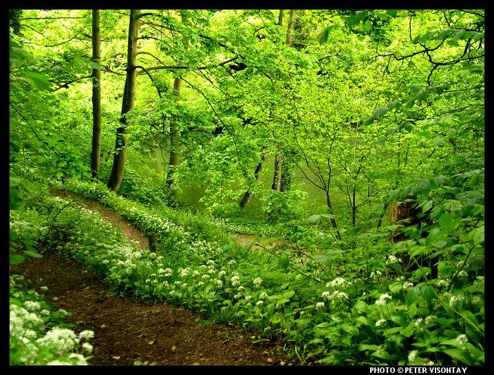 Лес.Природа