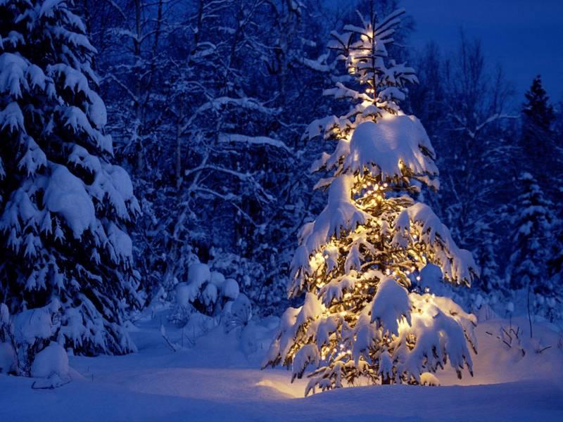 Новогодняя елка.Природа