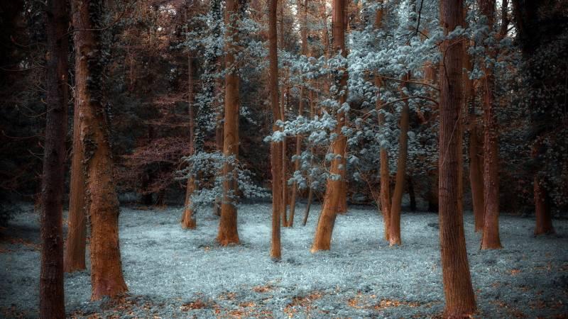 Лес покрытый инеем.Природа
