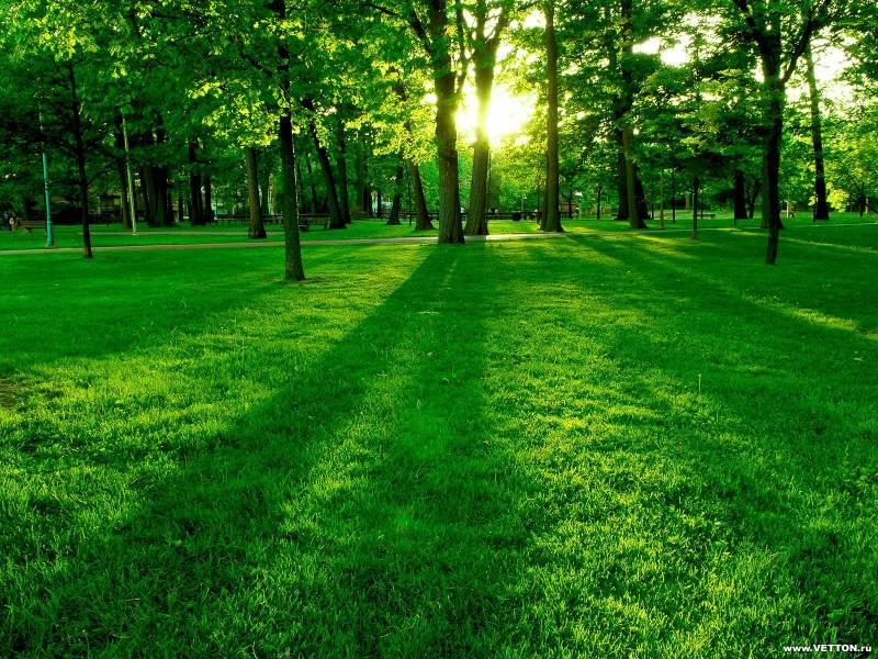 Зелёный лес.Природа