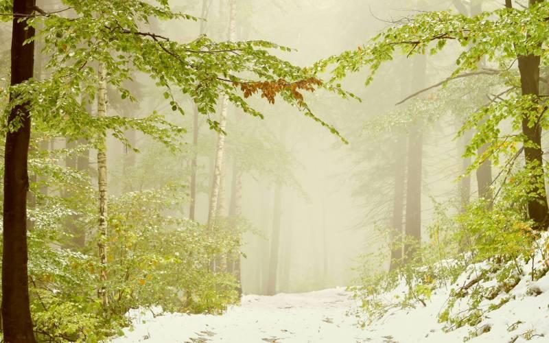 обои для рабочего стола первый снег природа 2741