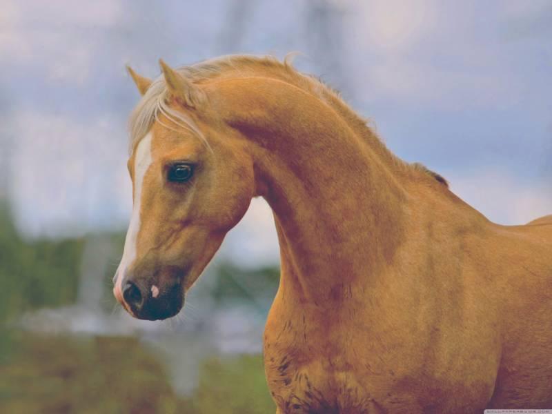 Лошадь.Животный мир