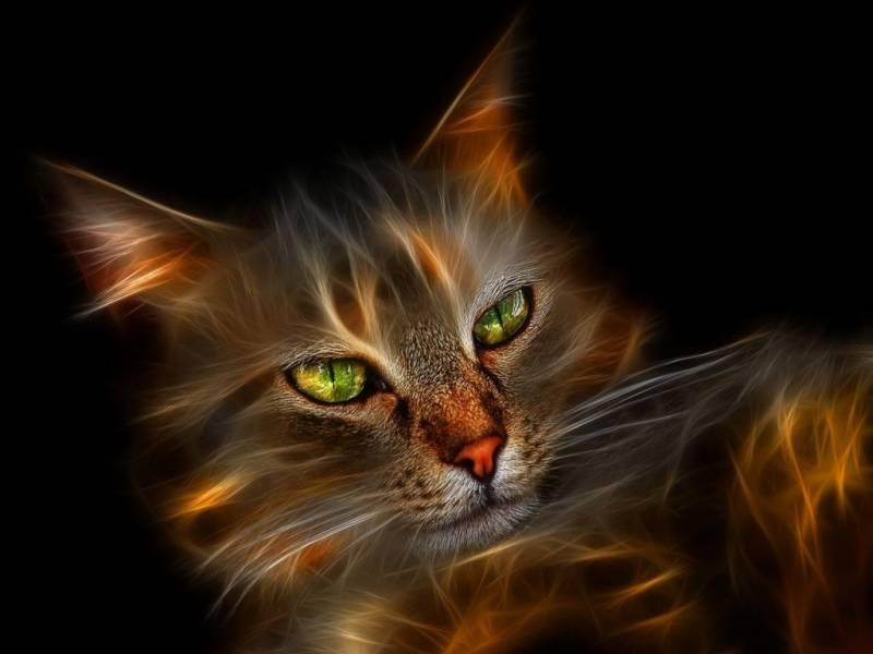 Картинка Огненный кот из коллекции Обои для рабочего стола Животный мир