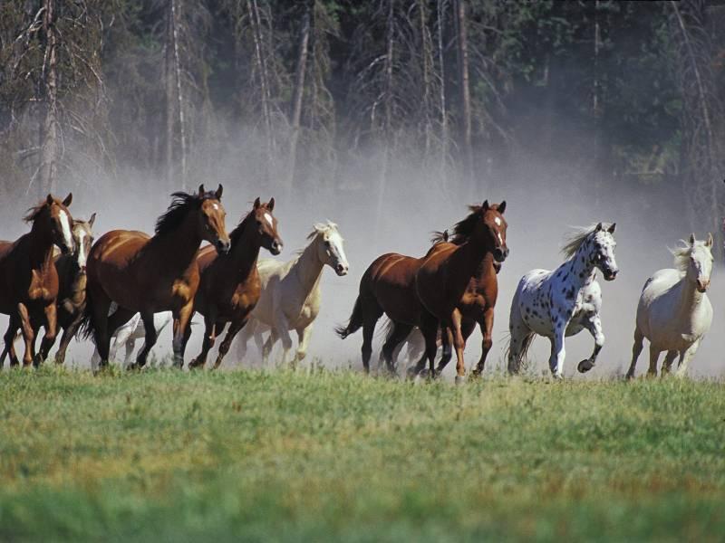 Дикие лошади.Животный мир