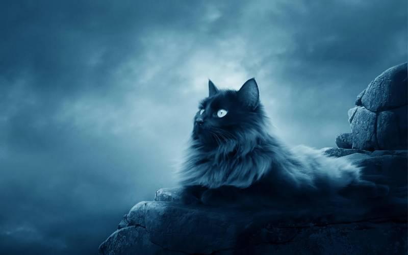 Голубая кошка.Животный мир