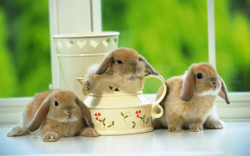 Домашние кролики.Животный мир