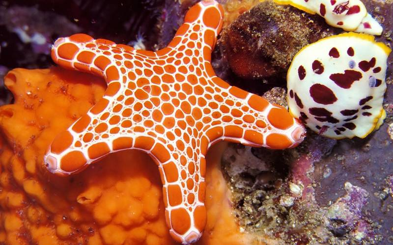 Морская звезда.Животный мир