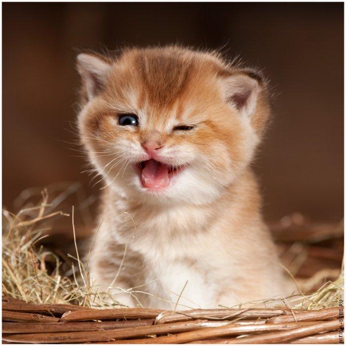 Котенок - Животный мир