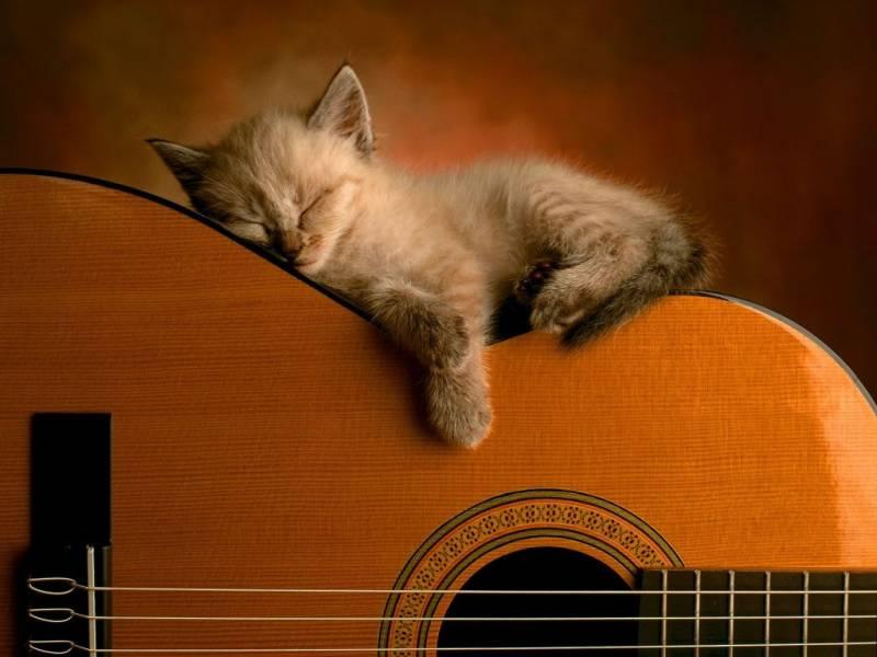 Котенок спит на гетаре - Животный мир