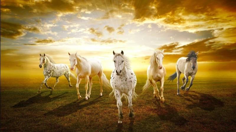 Обои с лошадями - Животный мир