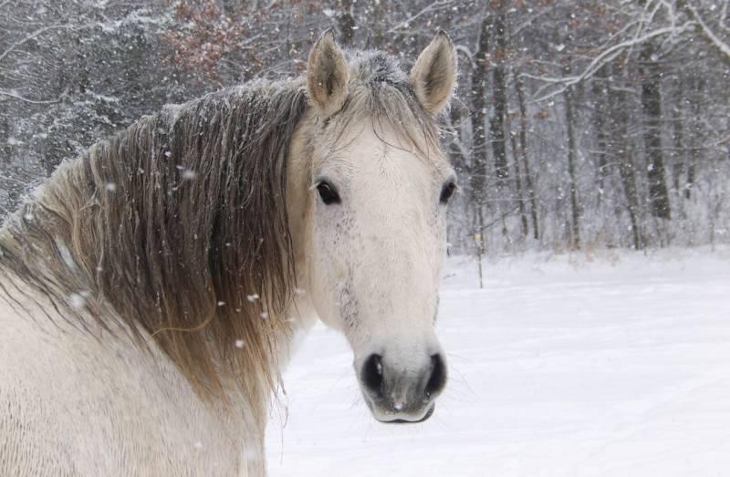 Лошадь зимой фото.Животный мир