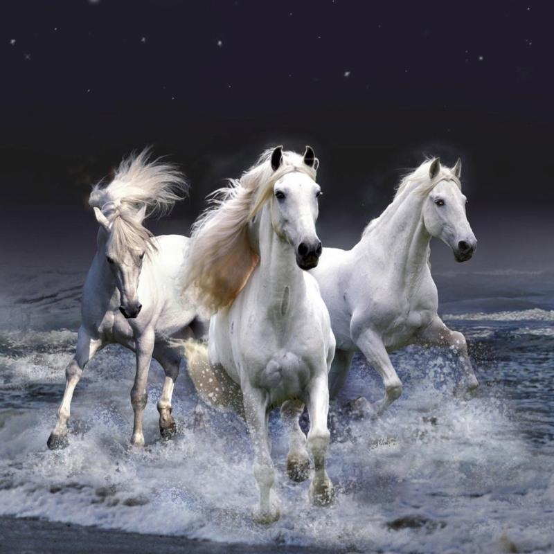 Три белых коня животный мир обои для рабочего стола