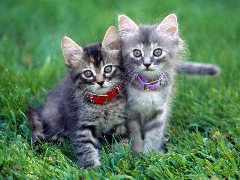 Котята.Животный мир