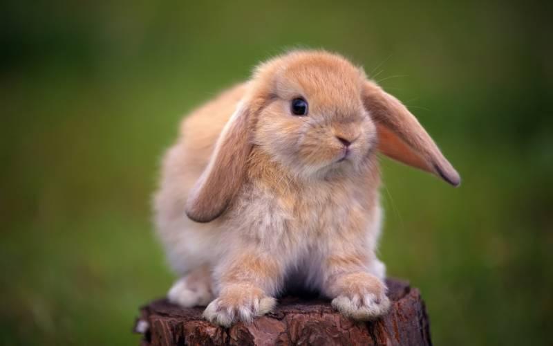 Кролик.Животный мир