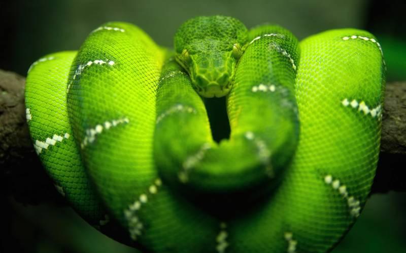 Зелёный удав.Животный мир
