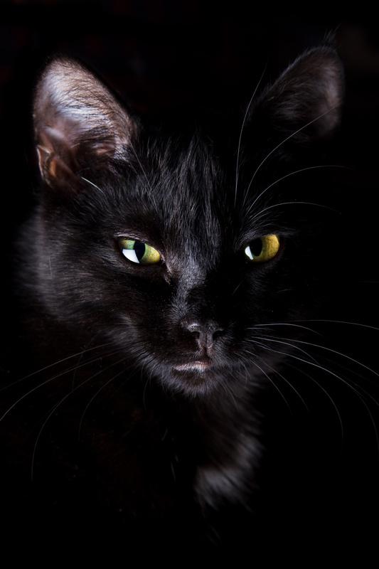 Black Cat - Животный мир