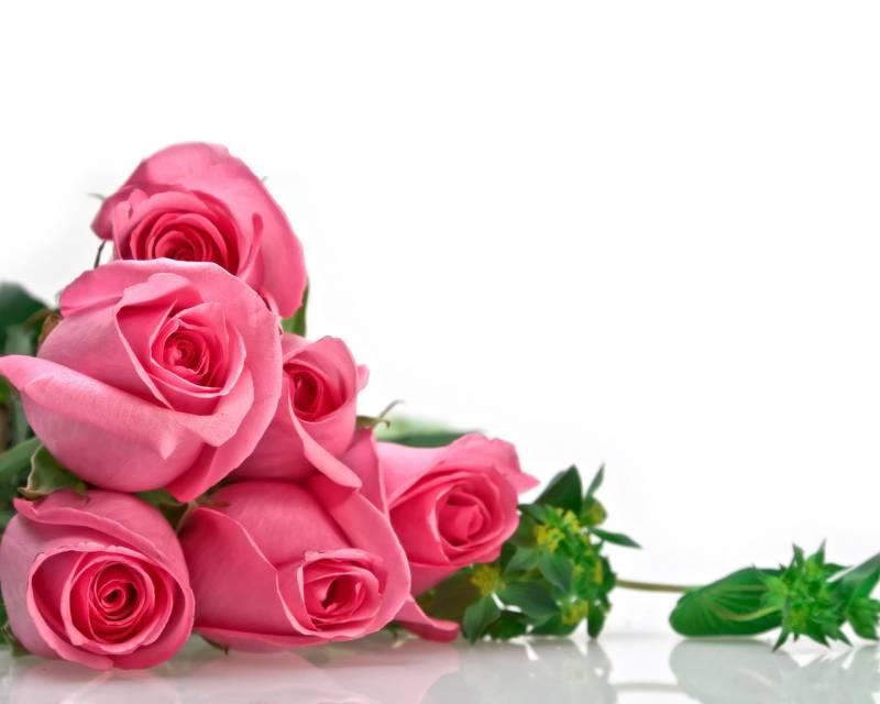 Картинка Розовые розы из коллекции Обои для рабочего стола Цветы