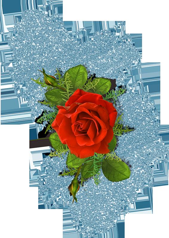 Картинка Красивая роза из коллекции Обои для рабочего стола Цветы