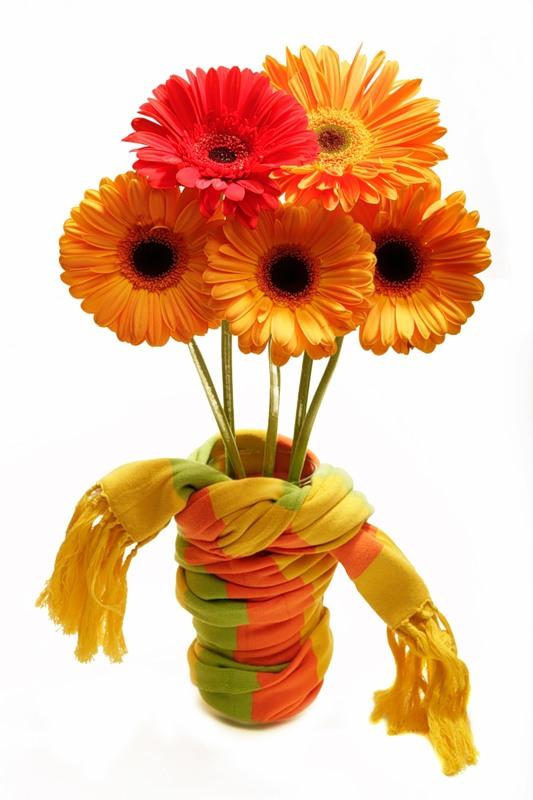 Герберы.Цветы