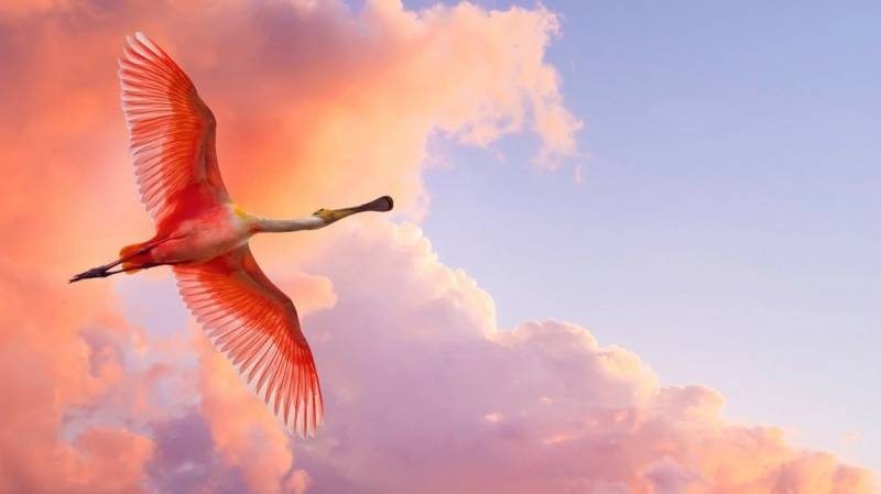 Птица в небе.Птицы