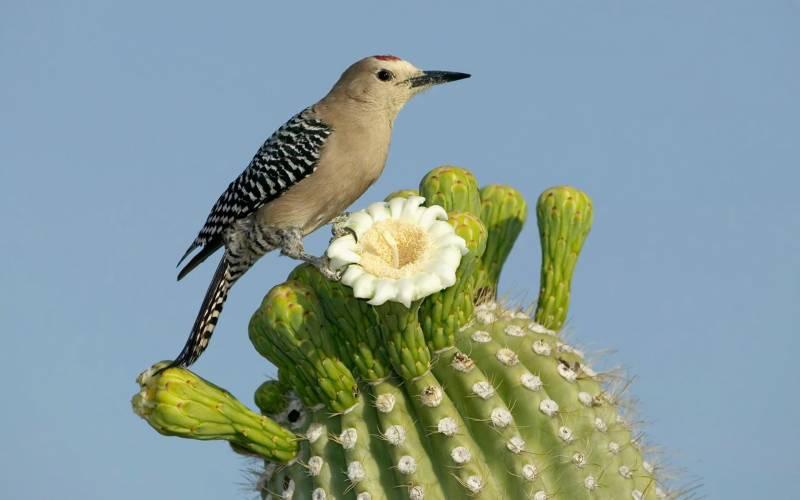 Птичка на кактусе.Птицы