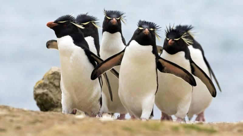Картинка Прикольные пингвины из коллекции Обои для рабочего стола Птицы