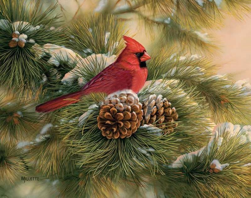 Картинка Птица из коллекции Обои для рабочего стола Птицы