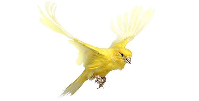 Желтая птичка.Птицы
