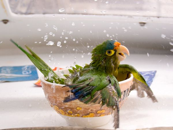Попугай - Птицы