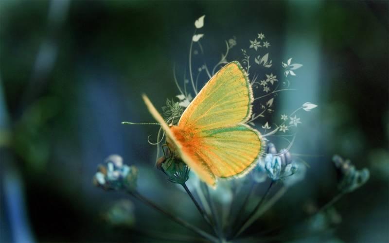 Жёлтый мотылек - Насекомые