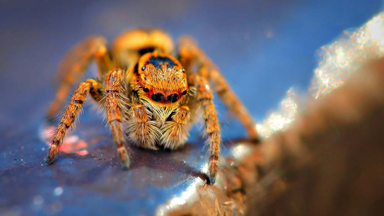 Картинка Фото паука макро из коллекции Обои для рабочего стола Насекомые