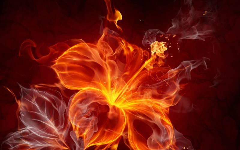 Картинка Огненный цветок из коллекции Обои для рабочего стола Абстракции