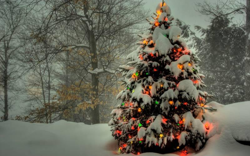 Обои с ёлкой в лесу - Новогодние обои 2019