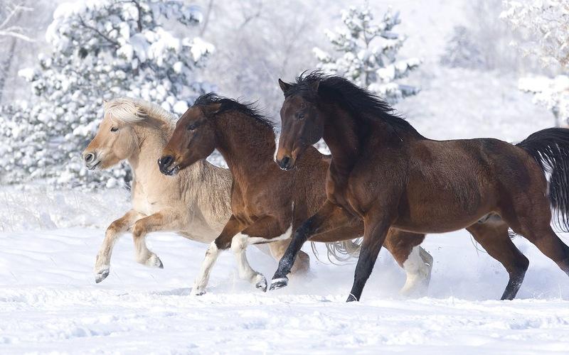 Тройка лошадей.Новогодние обои 2016