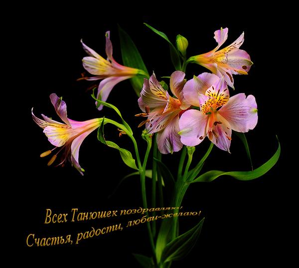 Картинка Татьянин день из коллекции Открытки Открытки к праздникам