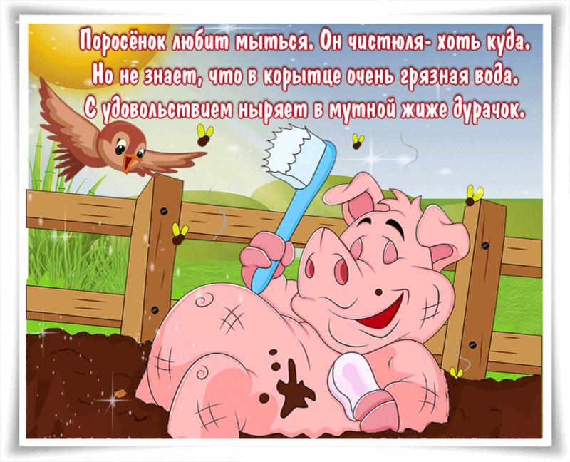 Свинья везде грязь найдет - Со стихами картинки